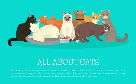 Cats show banner grooming or veterinary feline flyer vector illustration. Cute kitten pet poster. Funny animal studio. Lovely friendship advertisement pussy cat character.
