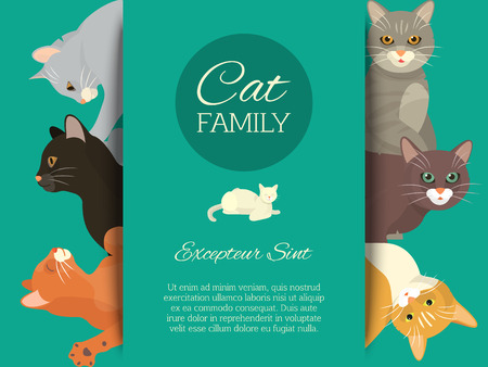 Cats family show banner grooming or veterinary feline flyer vector illustration. Cute kitten pet poster. Funny animal studio. Lovely friendship advertisement pussy cat character. Illustration