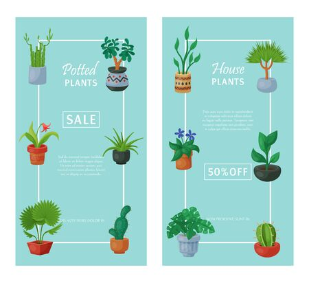 House flowers indoor floriculture banner vector illustration. Nature home decoration gardening. Indoor plants in flowerpot beauty decorative flora. Succulent foliage exotic garden houseplant.