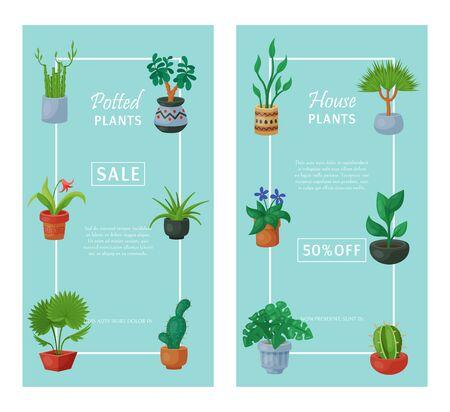 House flowers indoor floriculture banner vector illustration. Nature home decoration gardening. Indoor plants in flowerpot beauty decorative flora. Succulent foliage exotic garden houseplant.