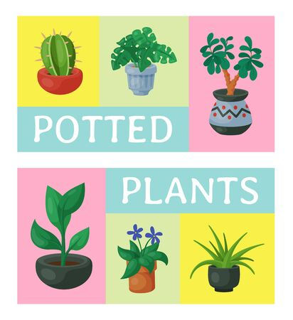 House flowers indoor floriculture poster vector illustration. Nature home decoration gardening. Indoor plants in flowerpot beauty decorative flora. Cozy succulent foliage exotic garden houseplant