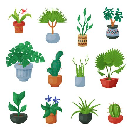 Plants in flowerpots potted flowery houseplants for interior decoration with botanic collection floral cactuses in pots and flowers in botanical garden illustration isolated on white background