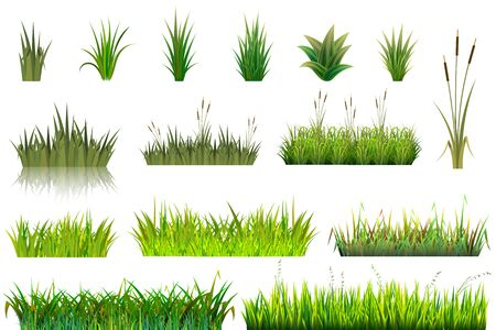 Grass grassland or grassplot and green grassy field illustration gardening set floral plants in garden isolated on white background Stock Photo