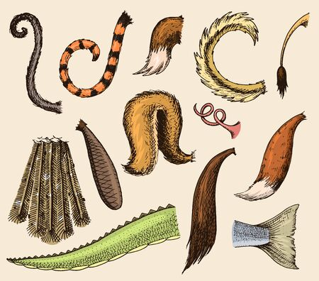 Animal tail animalistic tailed breast with furry feathers of limb illustration of tailend brush set isolated on background Standard-Bild - 126530551
