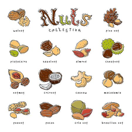 Nuts nutshell of hazelnut almond and walnut nutrition illustration set cashew peanut and chestnut with nutmeg isolated on white background