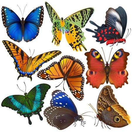 Butterfly colorful insect flying for decoration and beautiful butterflies wings fly in spring illustration set isolated on white background