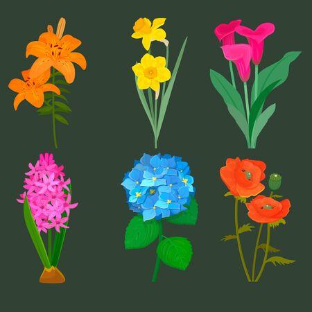 Beautiful flower bouquet design decoration nature design floral flower drawing leaf blossom botanical spring woman gift illustration Reklamní fotografie