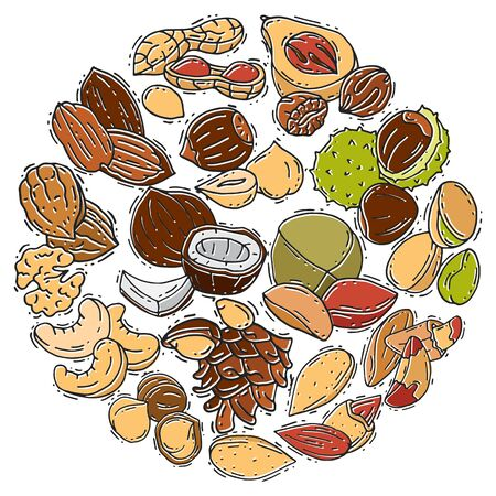 Illustration of nuts and seeds collection circle. Pattern of pecan, cashew, almond in circle form. Different nuts isolated. Pistachio, walnut, cedar seed and other