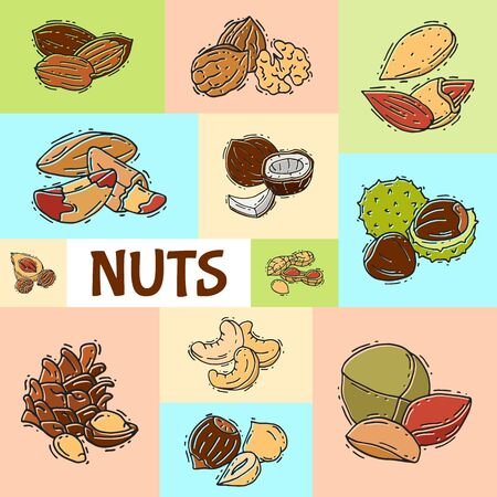 Nuts and seeds collection banner vector illustration. Different nut and seed colored poster. Collection of pecan, cashew, almond printable for flyers or invitation cards