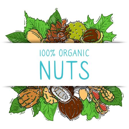 Nuts and seeds collection with paper label vector illustration. Mixed labelled organic nuts. Organic pecan, cashew, almond in square