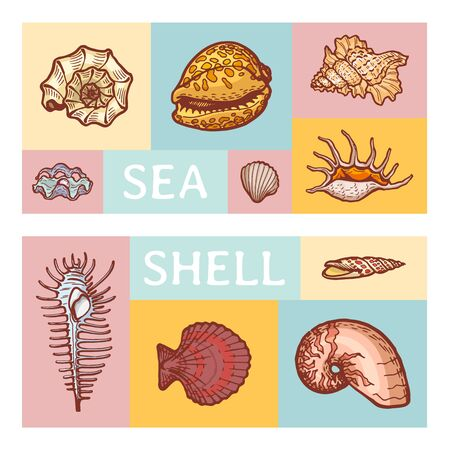 Sea shell cartoon vector illustration icon isolated on color tablet. Ocean cockleshell explore sea wildlife seaside study ancient fossils dweller.