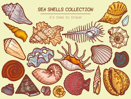 Sea shells collections icon, time to travel advertisement banner cartoon vector illustration. Explore ocean flora fauna, seaside wildlife.