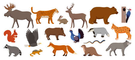 Forest animals isolated on white set of vector illustration. Woodland animals and birds. Moose, deer, bear and hedgehog, rabbit, squirrel, beaver.
