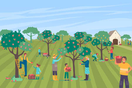 Farmer people character together pick apple large orchard, family farm worker collecting pome tree flat vector illustration.
