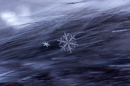 Schneeflocken auf Pelz Nahaufnahme