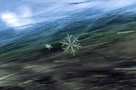 Schneeflocke auf Pelz Nahaufnahme