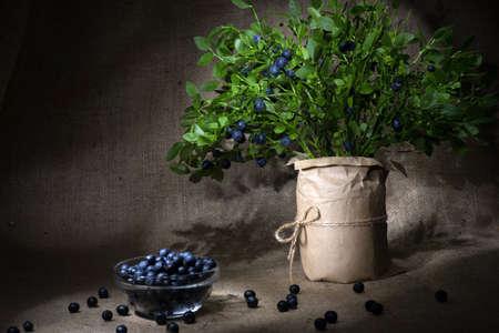 Gerade ausgewählte Bündel von Blaubeeren Zweige in Vase und Beeren in der Schüssel Licht Pinsel