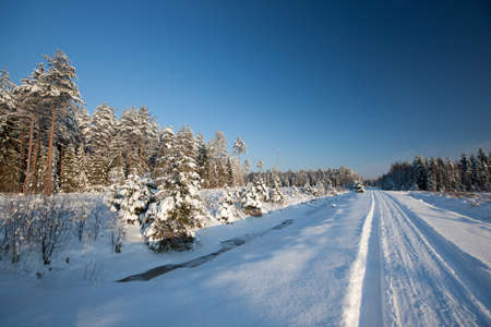 country side: Winter road in country side with fir trees, Latvia, Baltic state, Europe