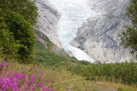 Jostedal glacier with pink flowers  in  Norway, Scandinavia, Europe photo