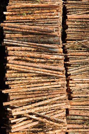 Renewable resource - raw timber materials ready for transportation in dock Stock Photo - 17006108