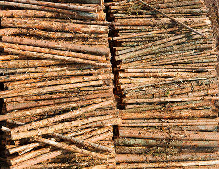 Renewable resource - raw timber materials ready for transportation in dock Stock Photo - 17006095
