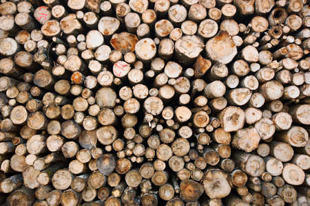Renewable resource - raw timber materials ready for transportation in dock Stock Photo - 17006082