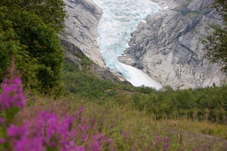 jostedal: Jostedal glacier with pink flowers  in  Norway, Scandinavia, Europe
