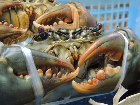 Mangrove crab in Okinawa, Japan