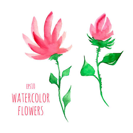 transparently: Watercolor flowers on a transparent background Illustration