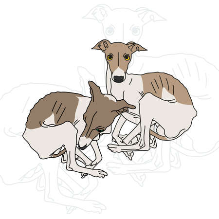 leggy: Vector illustration of two Italian greyhound spotted without collars