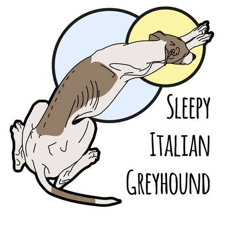 leggy: Illustration of a sleeping Italian greyhound without a collar