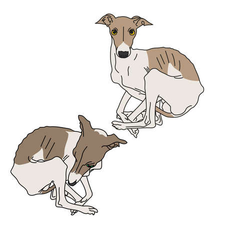 greyhound: Illustration of two Italian greyhound spotted without collars Stock Photo