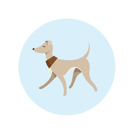 leggy: Vector Image With Pretty Walking Italian Greyhound. Cartoon Illustration. Illustration