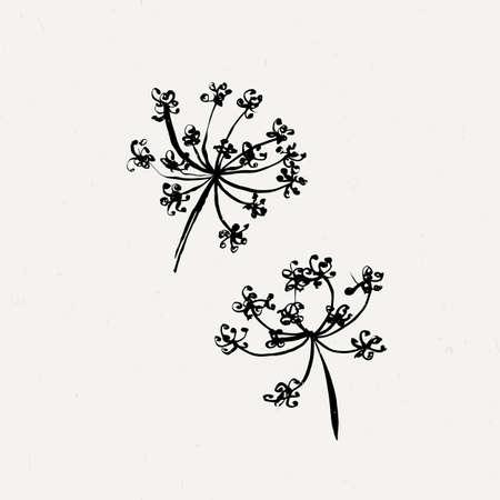milfoil: Set of milfoil or wet dandelion flowers. Ink traced collection. Illustration