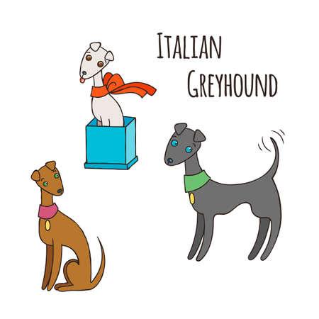 leggy: Italian Greyhound Cartoon Dog Set. Vector Illustration