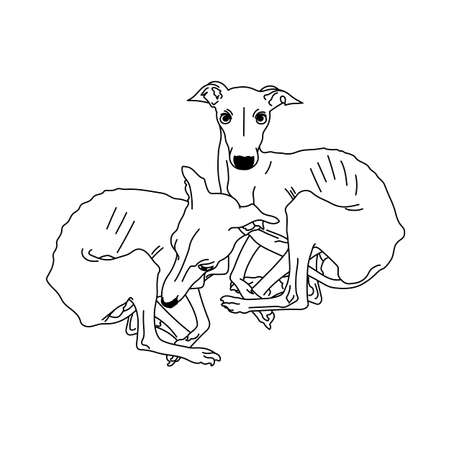 Vector illustration of two Italian greyhound spotted without collars