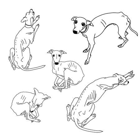 128 Sighthound Stock Vector Illustration And Royalty Free Sighthound
