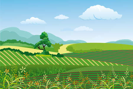 yellow hills: Countryside landscape