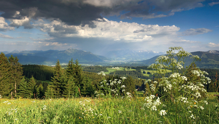 yarrow: Flower meadow and thundery clouds in the mountains