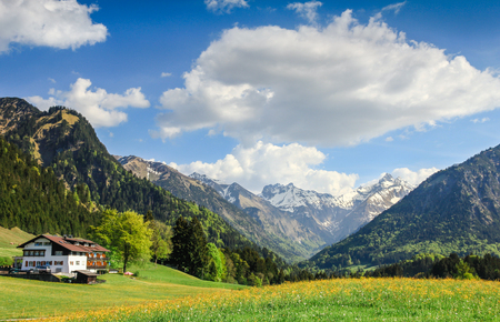 alpen: Flower meadow and snow covered mountains in spring.