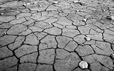 Monochrome mud texture of drying prism desiccation cracks in soil.