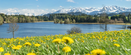 Beautiful flower meadow at alpine lake and snow covered mountains.