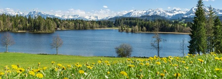 dandelion snow: Beautiful flower meadow at lake shore and snow covered mountains. Stock Photo