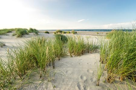 Beach with sand dunes and marram grass in soft evening sunset light. Stock Photo