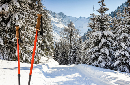 Pair of hiking sticks in snow. Sporting activity in mountains winter landscape and forest.