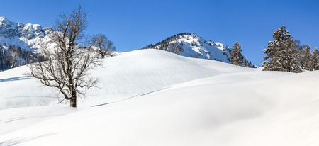 Solitary maple tree in deep snow. Mountains winter landscape on clear sunny day.