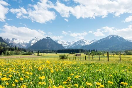 Beautiful flower field pasture and snow covered mountains and small huts