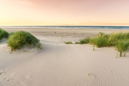 Beach with sand dunes and marram grass in soft orange evening sunset light. Beach dunes at Skagen Nordstrand where Baltic Sea and North Sea are colliding. Foto de archivo