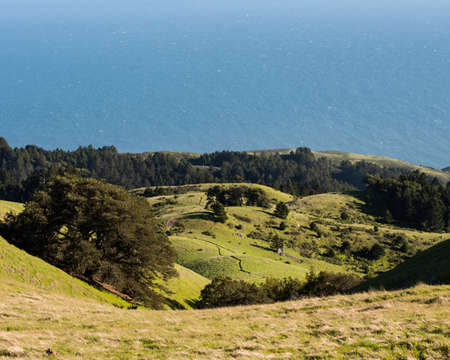 Looking down from a hill toward forest with green grass and blue ocean on horizon. Stock Photo