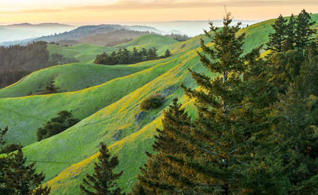 Sunset of rolling green hills and pine trees with fog in the distance.